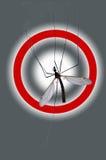 Gefahr: Moskito! Stockbild