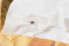 Gefahr von Milben im Wald stockbild