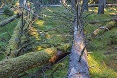 Gefallene Bäume Lizenzfreies Stockfoto