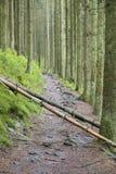 Gefallene Bäume auf Spur, die Ardennen, Belgien Lizenzfreies Stockbild