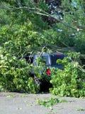 Gefallene Bäume im Wald nach einem Sturm Stockbild