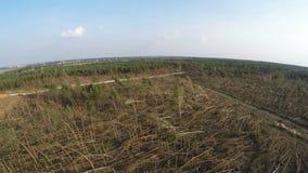 Gefallene Bäume in Koniferen-Forest After Strong Hurricane Wind stock video