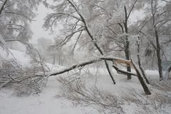Gefallene Bäume in Moskau Lizenzfreie Stockfotografie