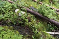 Gefallene Bäume nahe Langfoss in Norwegen lizenzfreie stockfotografie