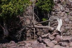 Gefallene Baum-Stachelbeerfälle Stockfoto