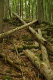 Gefallene Baumstämme, die kreuzend errichten Stockbild