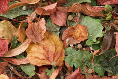 Gefallene Blätter Stockfotos