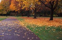 Gefallene Blätter Stockfotografie