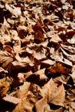 Gefallene Blätter lizenzfreie stockfotografie