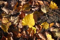 Gefallene Blätter lizenzfreie stockfotos