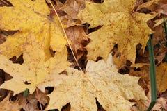 Gefallene Blätter Stockfoto