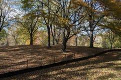Gefallene Blätter auf Central Park, New York Lizenzfreies Stockbild