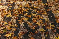 Gefallene Blätter auf dem Bürgersteig stockbild