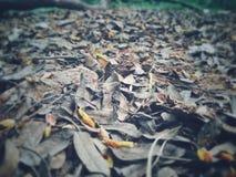 Gefallene Blätter auf dem Boden Stockfotografie