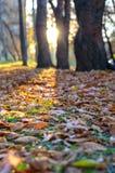 Gefallene Blätter auf dem Gras im Park. Lizenzfreies Stockbild