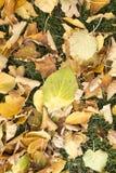 Gefallene Blätter auf dem Grasland Stockfotografie