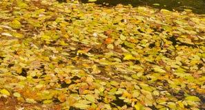 Gefallene Blätter auf dem Wasser Stockfotos