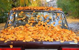 Gefallene Blätter auf einem Auto Stockbilder