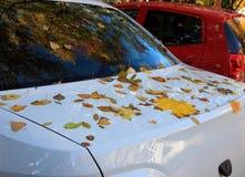 Gefallene Blätter auf einem Auto lizenzfreie stockfotografie