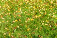 Gefallene Blätter auf einem grünen Gras Stockfoto