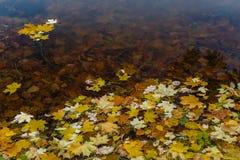 Gefallene Blätter auf einem Teich Stockbild
