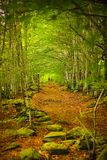 Gefallene Blätter auf einem Weg im Wald in Beigua nationales Geo parken stockfotos