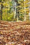 Gefallene Blätter auf einer Wanderung Stockfotos