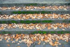 Gefallene Blätter auf Gehwegjobsteps. lizenzfreie stockbilder