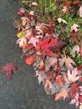Gefallene Blätter auf Rand stockfotos