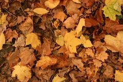 Gefallene Blätter aus den Grund Stockbild
