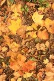 Gefallene Blätter aus den Grund Stockfoto