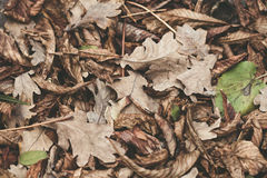 Gefallene Blätter der Kastanie, Ahorn, Eiche, Akazie Lizenzfreie Stockbilder