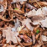 Gefallene Blätter der Kastanie, Ahorn, Eiche, Akazie Brown, Rot, Orange und gren Autumn Leaves Background Lizenzfreies Stockfoto