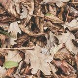 Gefallene Blätter der Kastanie, Ahorn, Eiche, Akazie Brown, Rot, Orange und gren Autumn Leaves Background Weiche Farben Lizenzfreies Stockbild