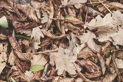 Gefallene Blätter der Kastanie, Ahorn, Eiche, Akazie Brown, Rot, Orange und gren Autumn Leaves Background Weiche Farben Stockfotografie