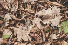Gefallene Blätter der Kastanie, Ahorn, Eiche, Akazie Brown, Rot, Orange und gren Autumn Leaves Background Weiche Farben Stockfoto