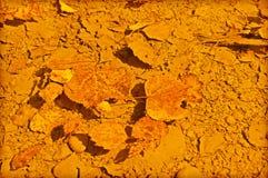 Gefallene Blätter in der Pfütze Lizenzfreie Stockfotografie