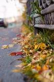 Gefallene Blätter in der Stadt Stockfoto