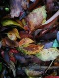Gefallene Blätter, die auf nassem Boden liegen Stockfoto