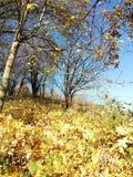 Gefallene Blätter in einigen Farben verziert die Waldlandschaft lizenzfreie stockfotos