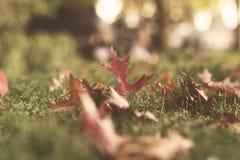 Gefallene Blätter im goldenen Licht Stockbilder