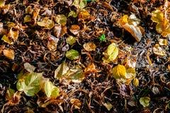 Gefallene Blätter im Herbst Stockfoto