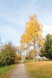 Gefallene Blätter im Herbst lizenzfreies stockbild
