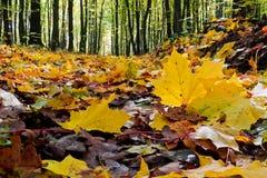 Gefallene Blätter im Herbstwald lizenzfreie stockbilder