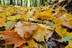 Gefallene Blätter im Herbstwald stockfotos