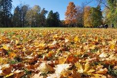 Gefallene Blätter im Herbstwald am sonnigen Wetter Stockfotografie