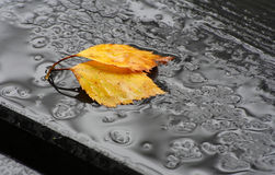 Gefallene Blätter im Regen Stockfotografie