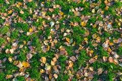 Gefallene Blätter liegen auf dem grünen Gras im Herbst Lizenzfreie Stockbilder