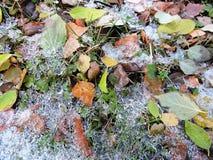 Gefallene Blätter mit Eis Lizenzfreie Stockfotos