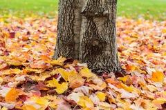 Gefallene Blätter um einen Baumstamm Stockfotografie